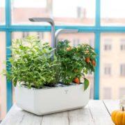 Jardin potager d'intérieur Smart - Véritable & Heureux comme un Prince