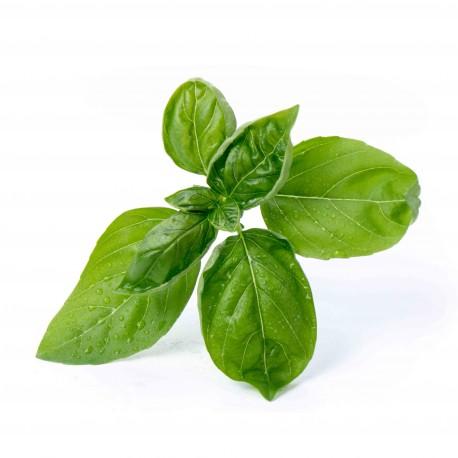Lingot basilic grand vert bio - Véritable & Heureux comme un Prince