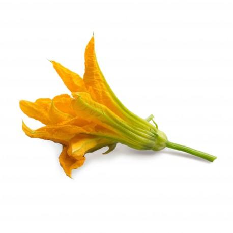 Lingot fleur de courgette - Véritable & Heureux comme un Prince